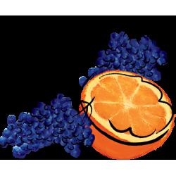 Elderberry Orange Marmalade