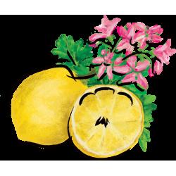 Meyer Lemon Rose Geranium Marmalade