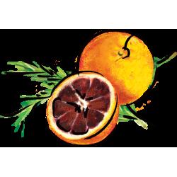 Blood Orange Rosemary Marmalade